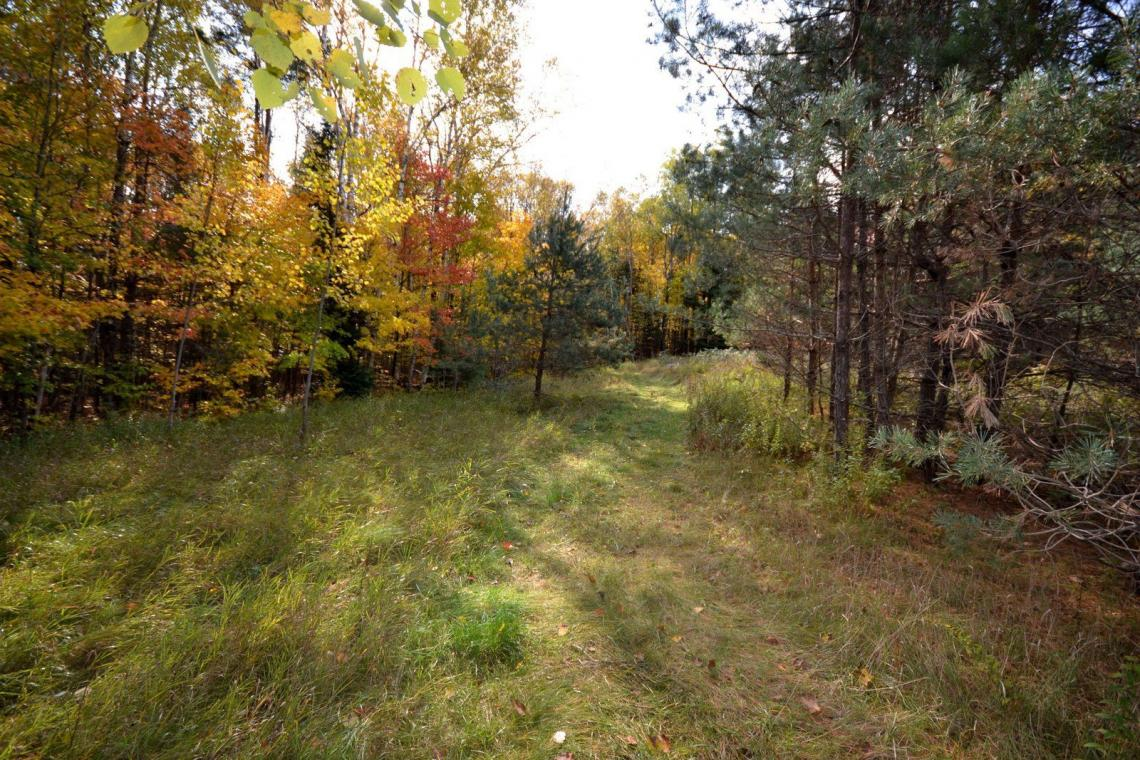 13.9 Acres, Osprey Road, Haliburton
