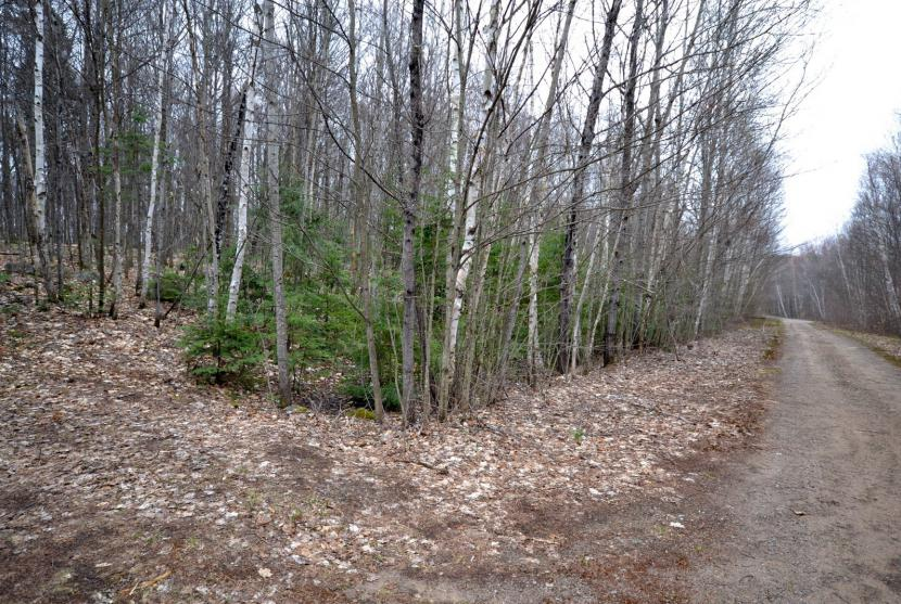 2.52 Acres, Ross Trail, Haliburton thumbnail